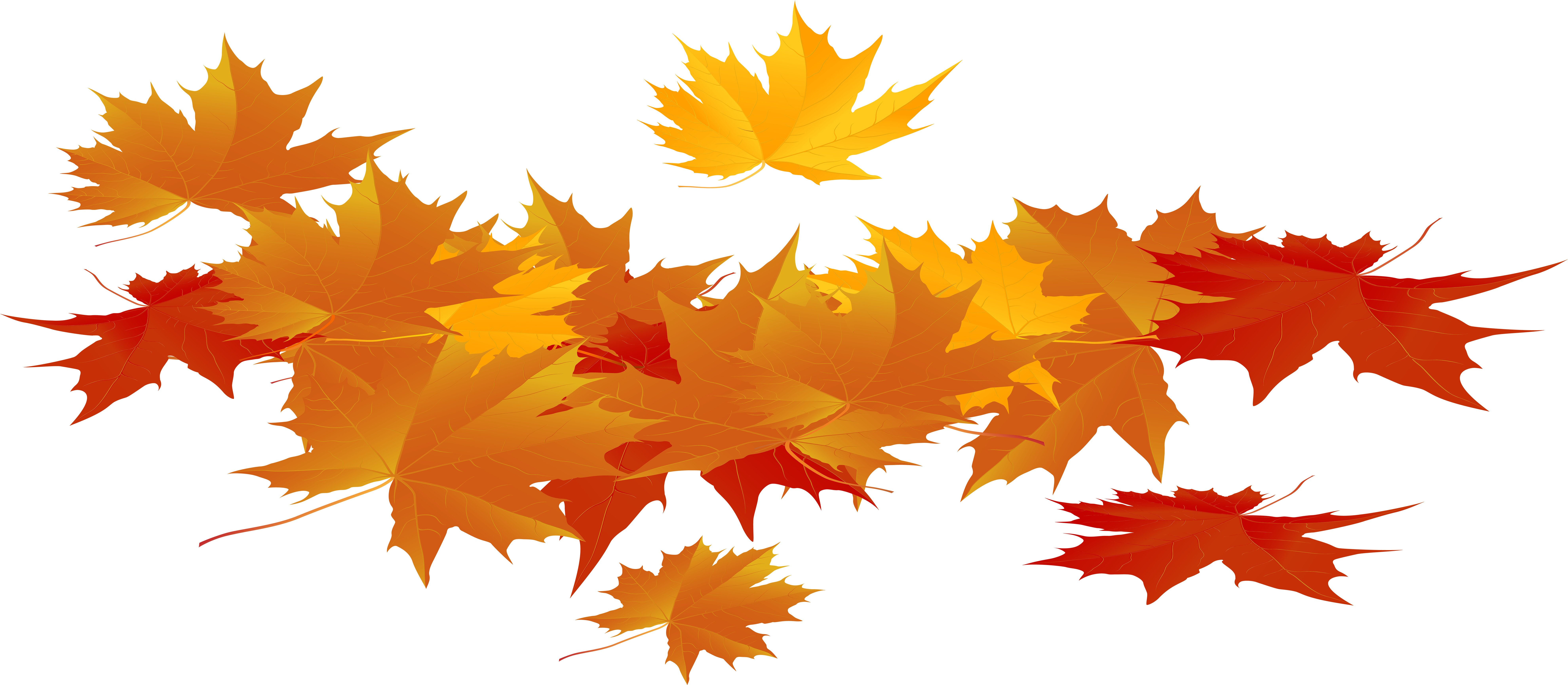 Thanksgiving Leaves Png Autumn Leaves Png Transparent Cartoon Jing Fm